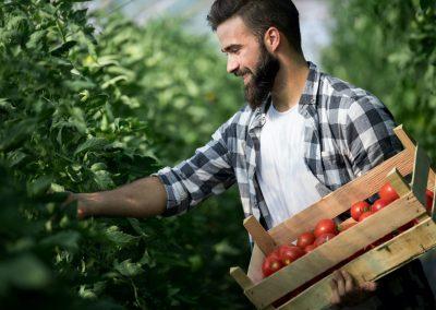 recrutamento mão de obra para agricultura